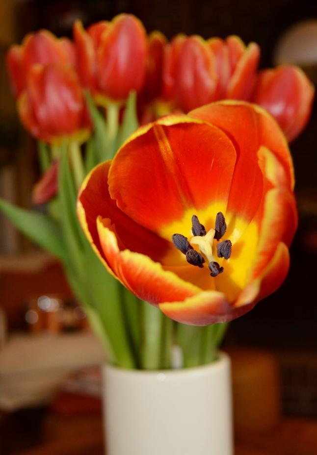 Flame Tulips 1