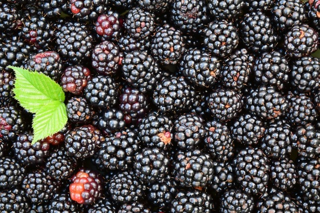 blackberries-1541320_960_720