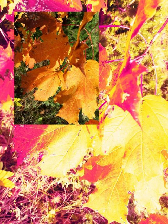 The heat of autumn